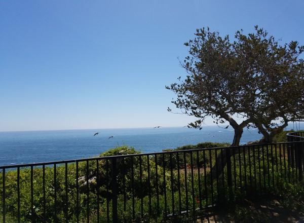 Contact Us Life in Laguna Beach Laguna Beach California LifeinLagunaBeach.com